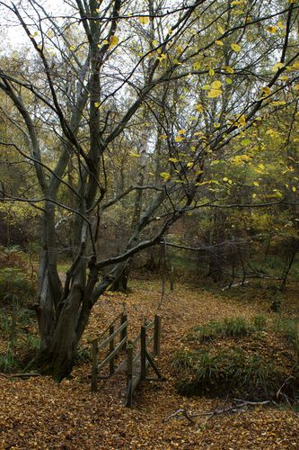 Broxbourne Woods 2
