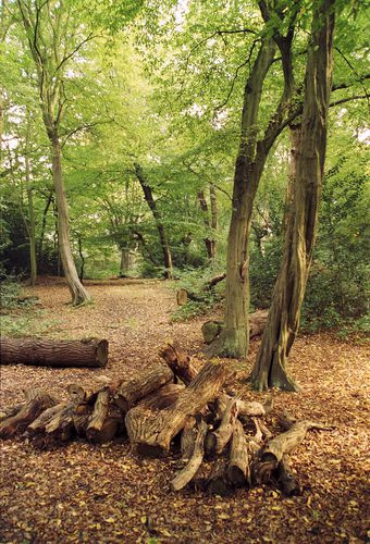 Epping Forest 1