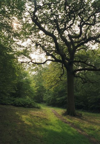 Epping Forest 2