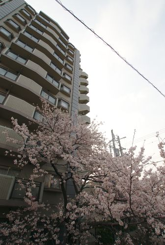 Kyoto Apartment Block With Sakura