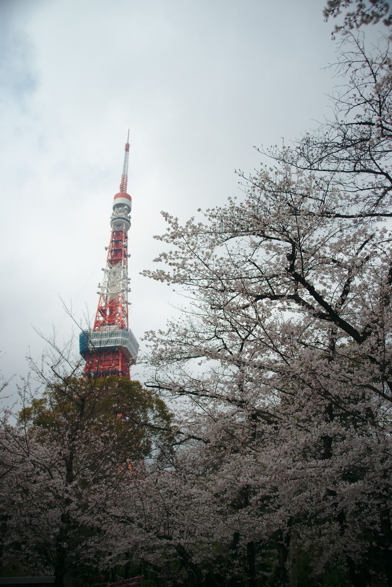 Tokyo Tower From Shiba Park